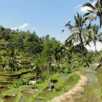 Yoma Villas Bali Accommodation Trip to Tegalalang Rice Terrace 08